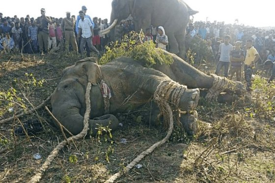 Elephant Named After Osama Bin Laden Kills Five People In India