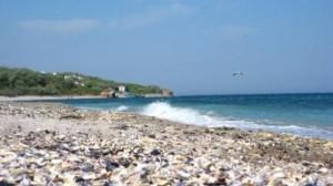Vacante litoral
