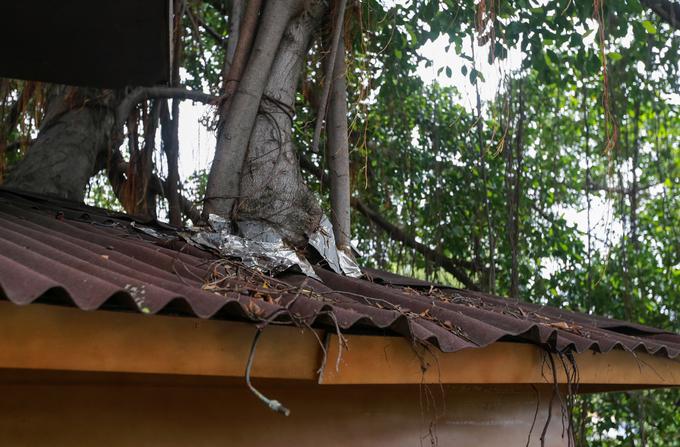 Ở cả phần trụ và mái đều có khoảng trống để cây phát triển. Ngoài ra, quán thường xuyên tỉa cành, bón thêm phân cho cây mọc tốt, người quản lý nói.