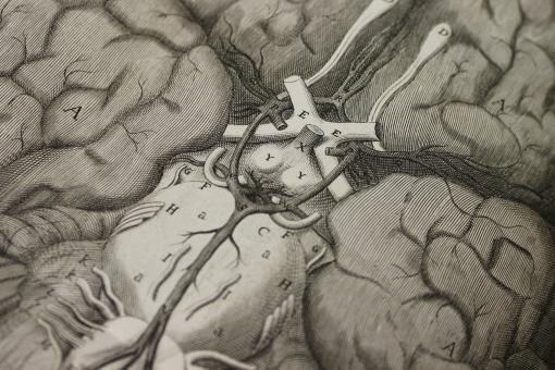 CN 9765, Willis, Cerebri anatomi, Circle of Willis, plate 1 cropped_0_0_0_0