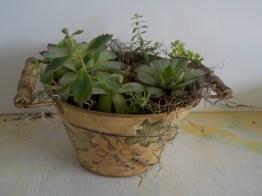Combination plants