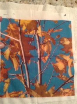 Oak and birch sampler