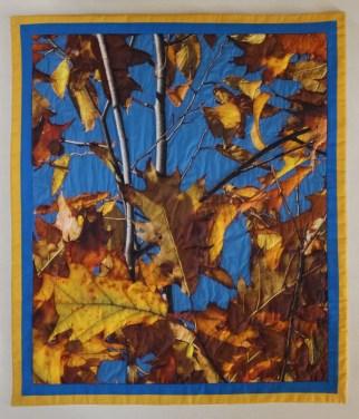 Oak and Birch