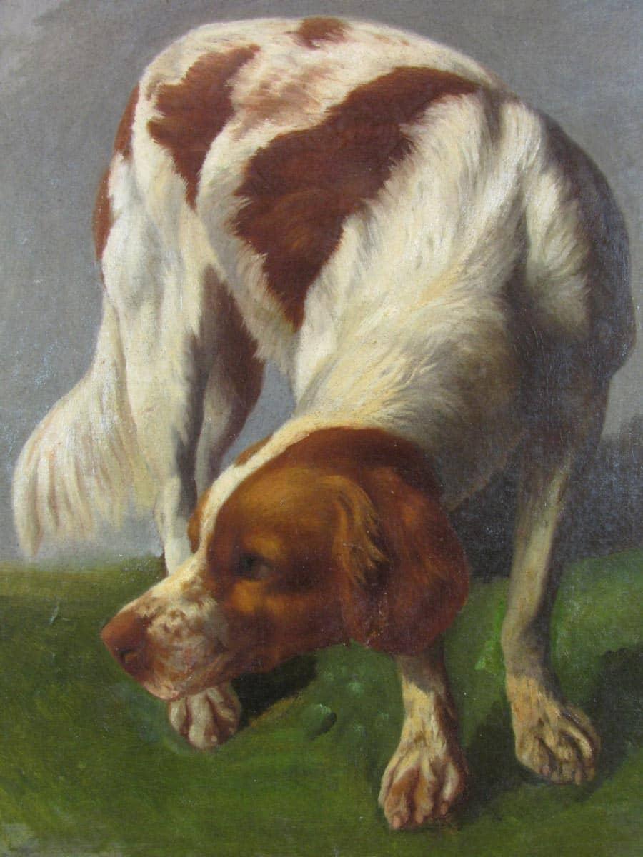 Cane da Caccia Breton Epagneul dipinto ad olio su tela