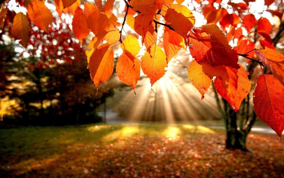 Bien vivre l'automne !