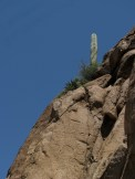 A saguaro cactus overlooks the cliff wall.