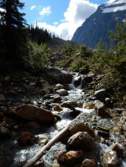 A creek running down the mountain at Mt Edith Cavell in Jasper Park.