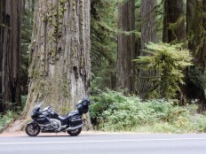 The Nightowl in front of a redwood's trunk in Jedediah Smith Redwoods State Park.
