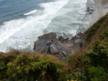 Sea lions cover the coastal rocks south of Heceta Head Lighthouse State Park.