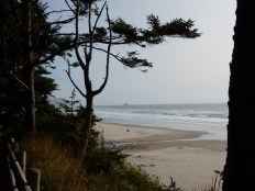 A view of the coastline south of Arcadia Beach State Park.