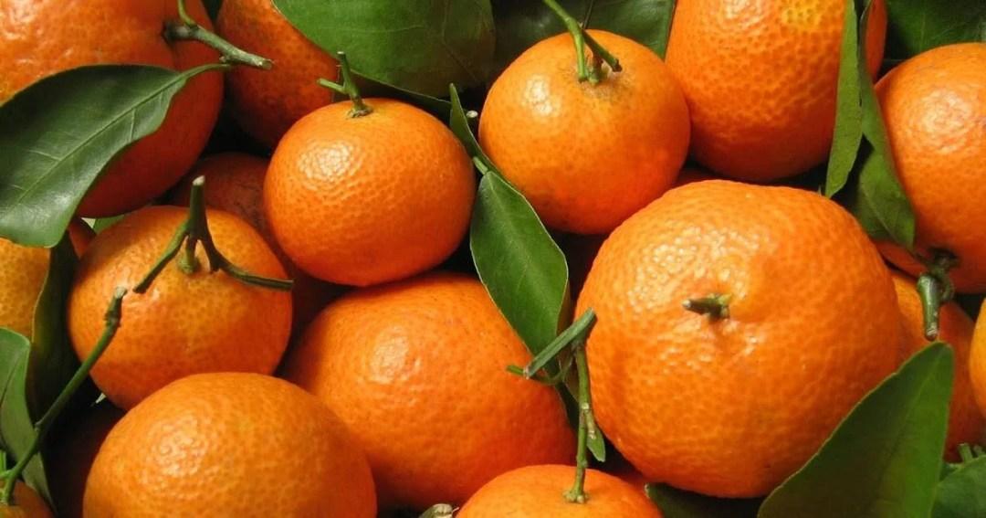 Citrus Sunday – May 22, 2016