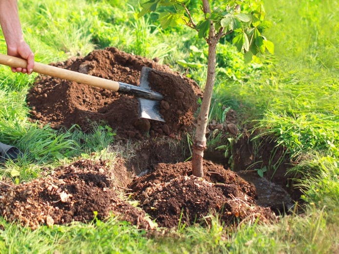 How to Get Free Trees to Plant in Your Yard