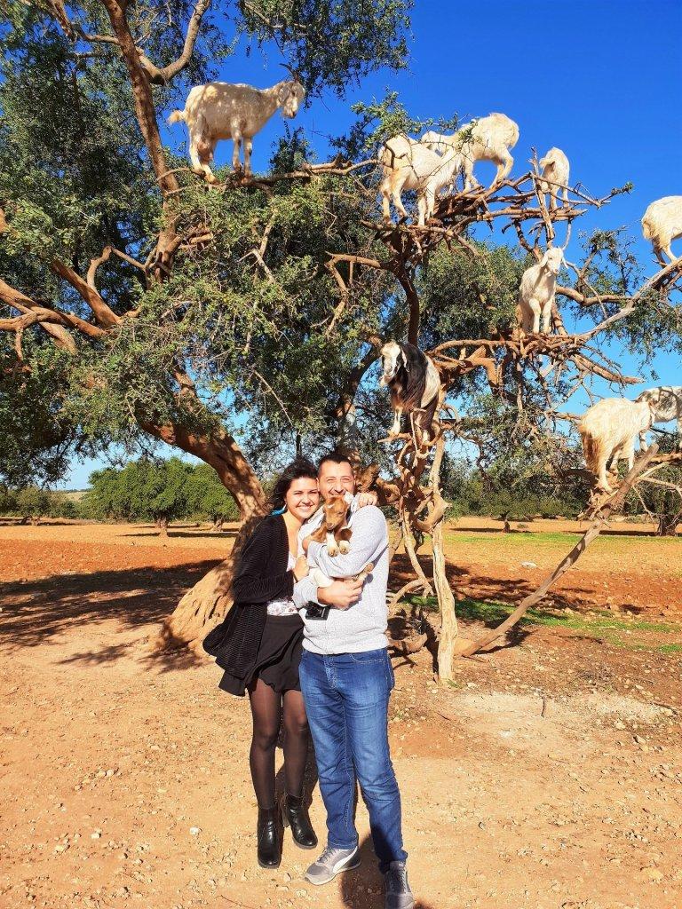 albero delle capre