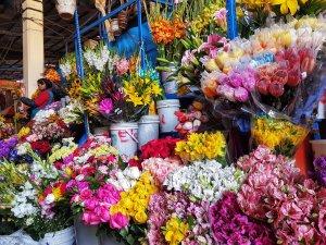fiori mercato san pedro