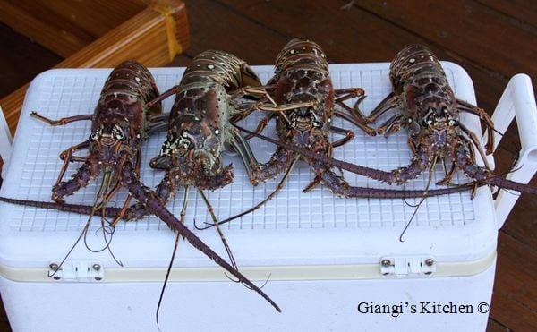 Lobster-Dinner-in-Florida.copy-8x6.JPG