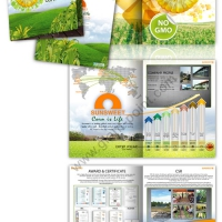 brochure design sunsweetthai