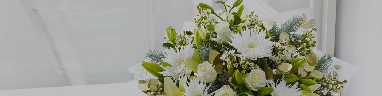 Come Curare Le Orchidee Tutti I Segreti Giardango