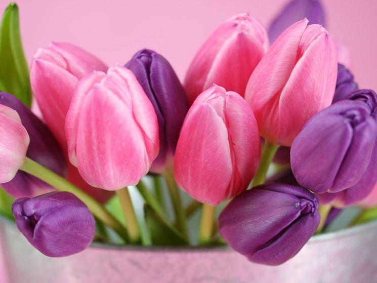 Significato fiori rosa  Linguaggio dei fiori  Fiori rosa