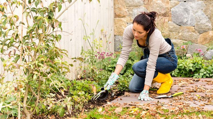 Lavori del mese giardino dicembre  Lavori del mese