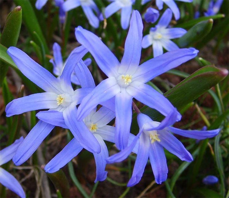 Piante perenni da fiore autunnali  Speciali  Piante perenni da fiore autunno  Speciali sul