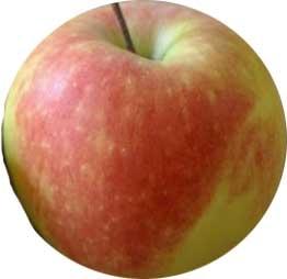 Variet di mele  Frutteto  Mele variet