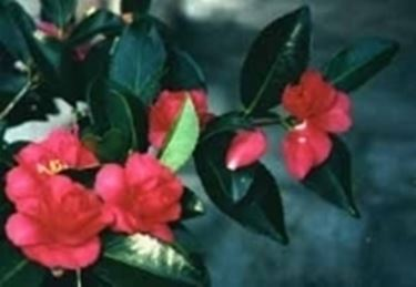 Corsi di giardinaggio  Speciali  Corsi di giardinaggio  Speciali sul giardinaggio