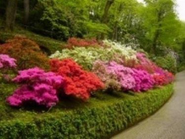 Giardini di Villa Taranto  Una gita a  Giardini di Villa Taranto  Una gita a
