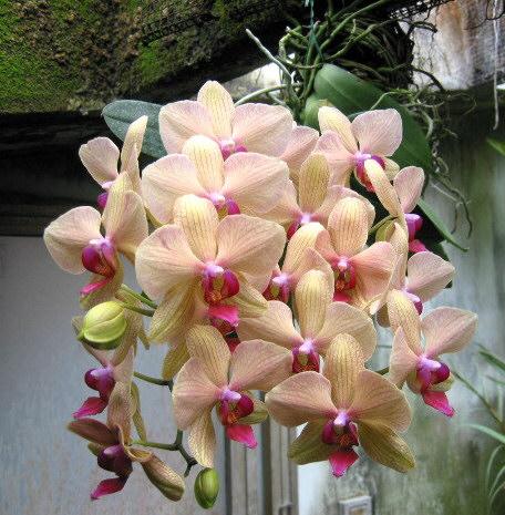terriccio per orchidee  Forum di Giardinaggioit