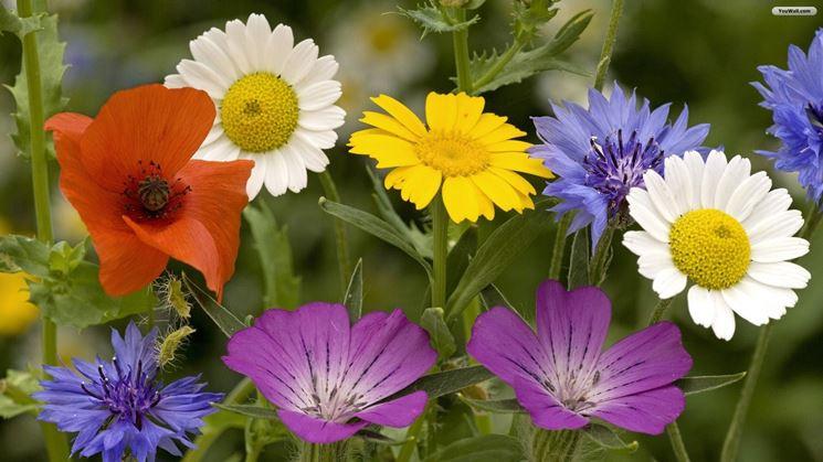 Fiori primaverili  fiori di piante  Tipologie fiori
