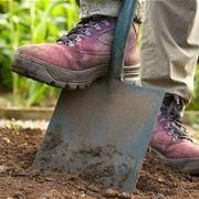 Lavori di giardinaggio  giardinaggio  Quali lavori di giardinaggio eseguire
