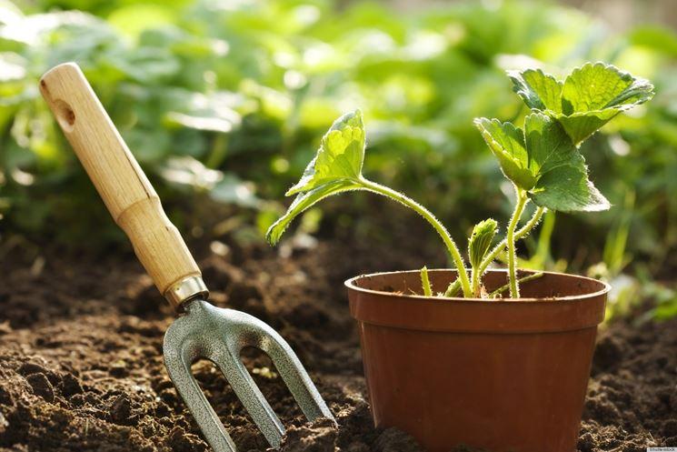 Piantine da orto  ortaggi  Come scegliere le piantine da