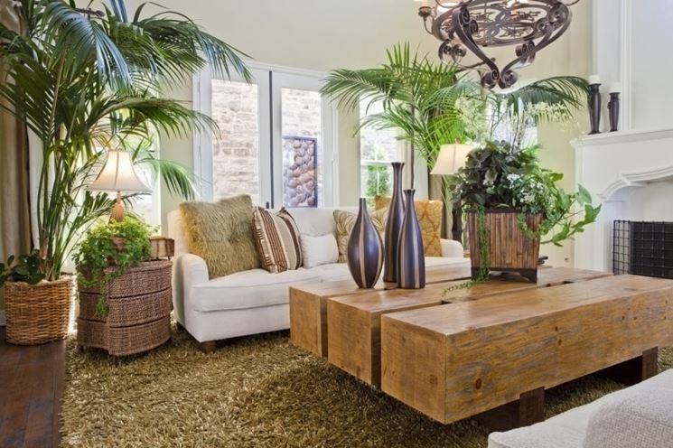 Piante dappartamento  piante appartamento  Tipologie