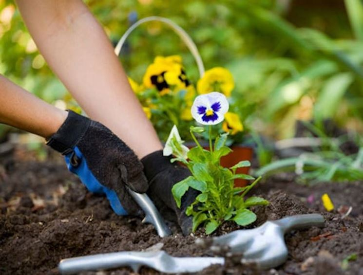 Lavori di giardinaggio  Giardinaggio  Giardinaggio lavori