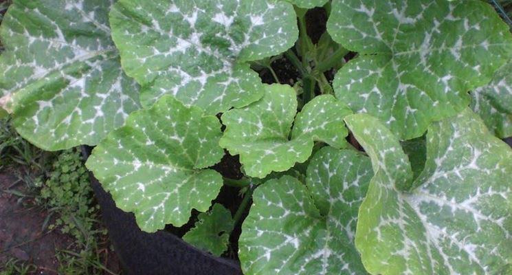 Zolfo in agricoltura  Malattie delle piante  Zolfo