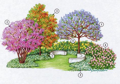 Alberi A Rapida Crescita Alberi Da Giardino Sempreverdi A
