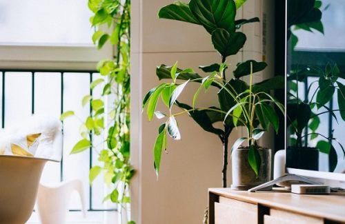 Le piante da appartamento rendono la casa più serena e vivace, aggiungono colore e sono decorative. Consigli Utili Per Far Crescere Le Piante Da Interno Correttamente