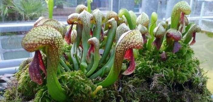 Le piante più strane al mondo: viaggio tra le bizzarrie della natura