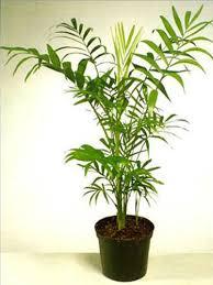 Le migliori piante da appartamento