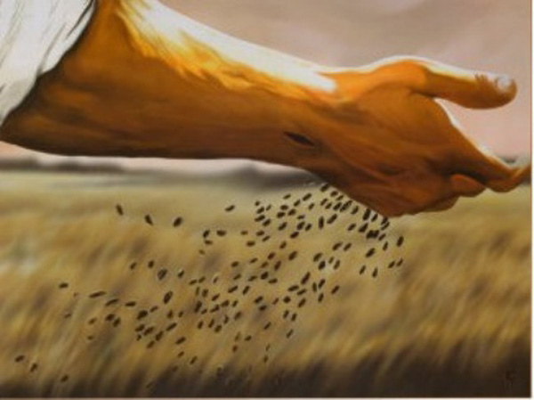 sementes-a-beira-do-caminho