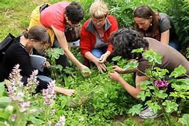 Atelier plantes médicinales @ Poitiers | Nouvelle-Aquitaine | France
