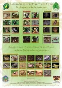 Mammals-&-amphibians-poster-008