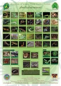 Snake-poster-0088