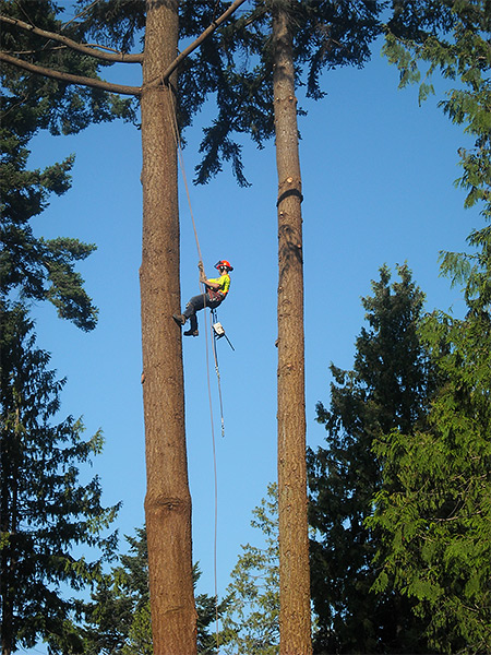 Gibsons Tree Service  Tree Pruning Tree Trimming Tree