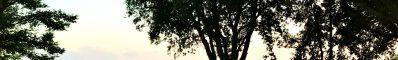 Poesia – Foglie di acacia