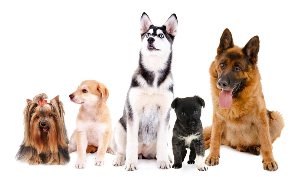 which dog breeds are best suited for apartment living gildshire