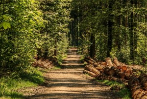Stick to the trails on your forest hikes