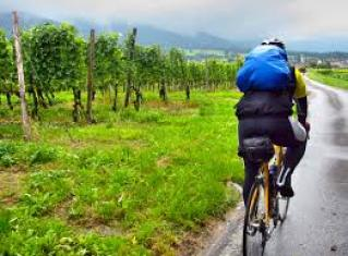 Pure joy, biking through the vines