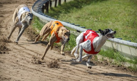 Florida eliminated the dog track industry in its state, effective 2020.