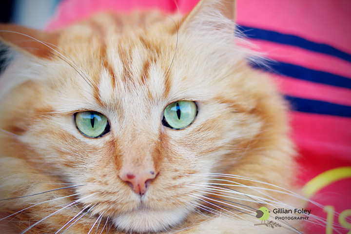 Just call me pet lover | Gillian Foley Photography