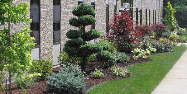 professional landscape design &